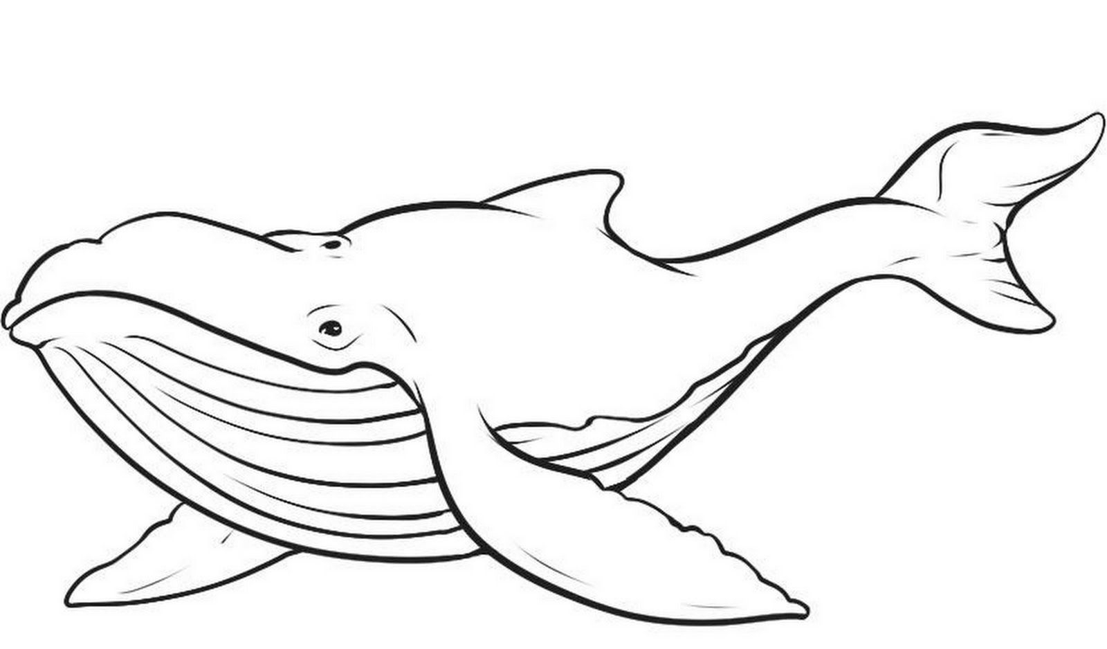 cartoon whale coloring page printable whale coloring pages stpetefestorg whale cartoon coloring page