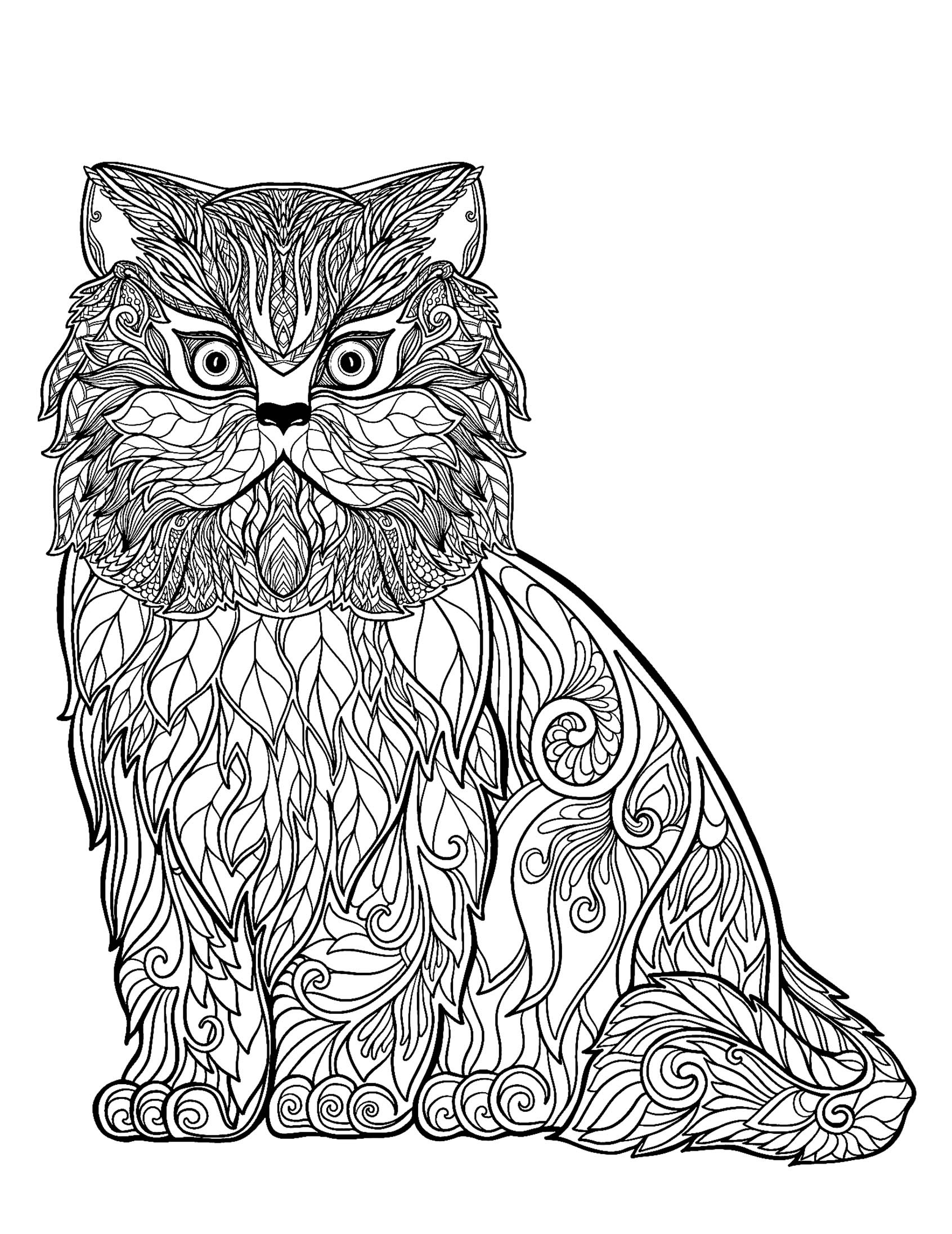 cat coloring pictures cute cat coloring pages to download and print for free pictures coloring cat