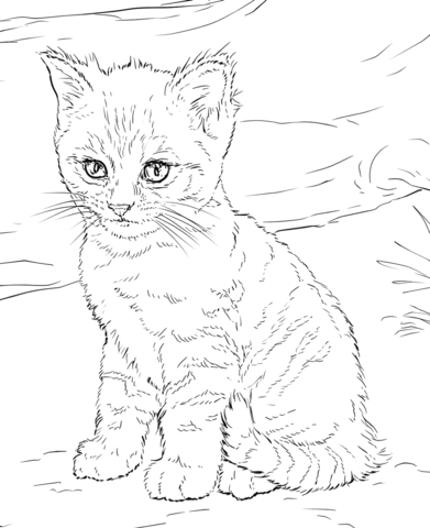 cat coloring pictures free printable cat coloring pages for kids pictures coloring cat 1 1