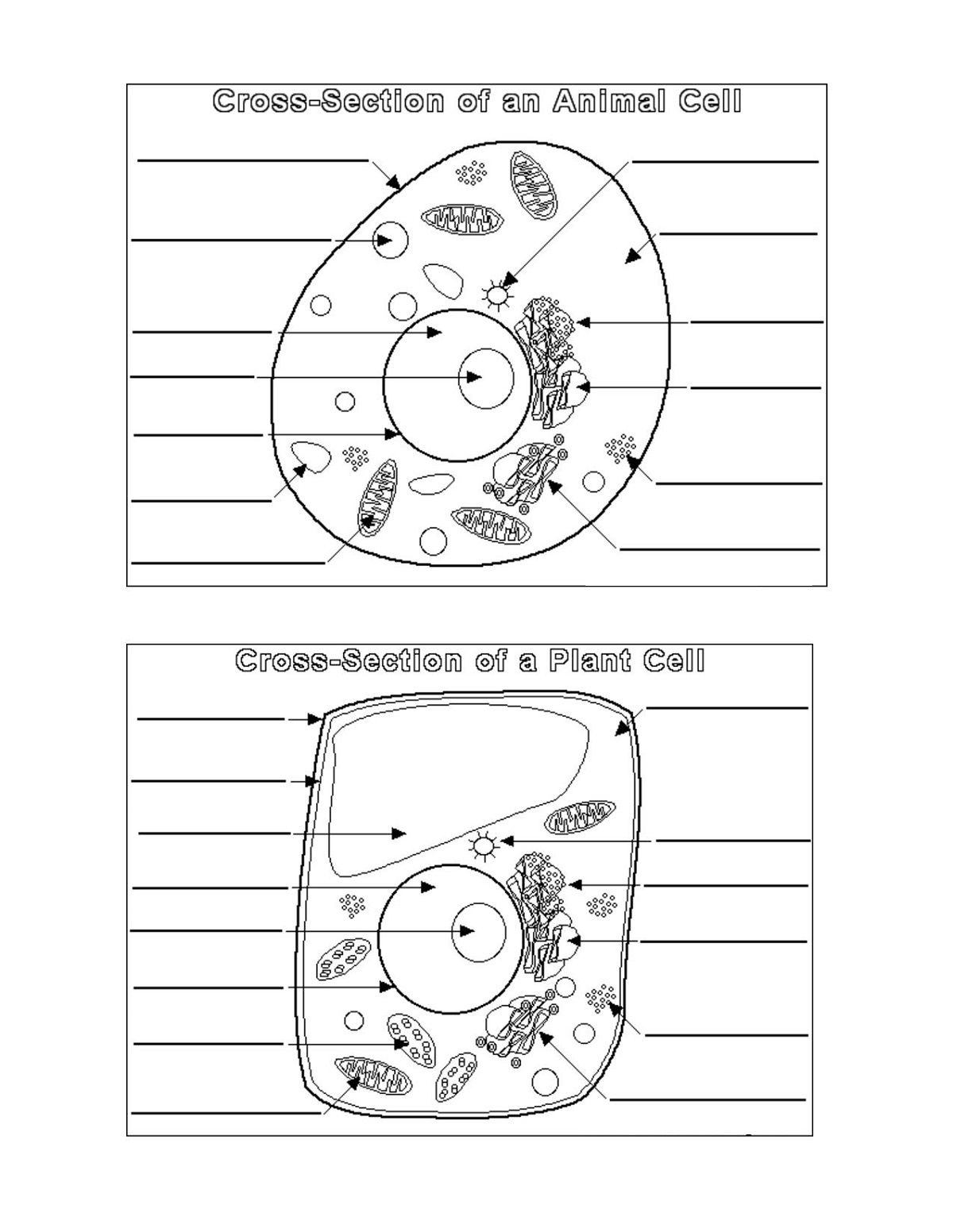 cell coloring worksheet 14 best images of label cell organelles worksheet label worksheet cell coloring