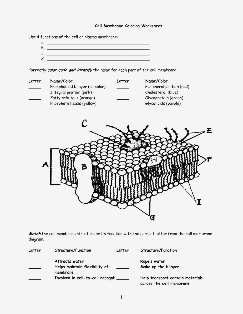 cell coloring worksheet cell cycle worksheet homeschooldressagecom worksheet coloring cell worksheet
