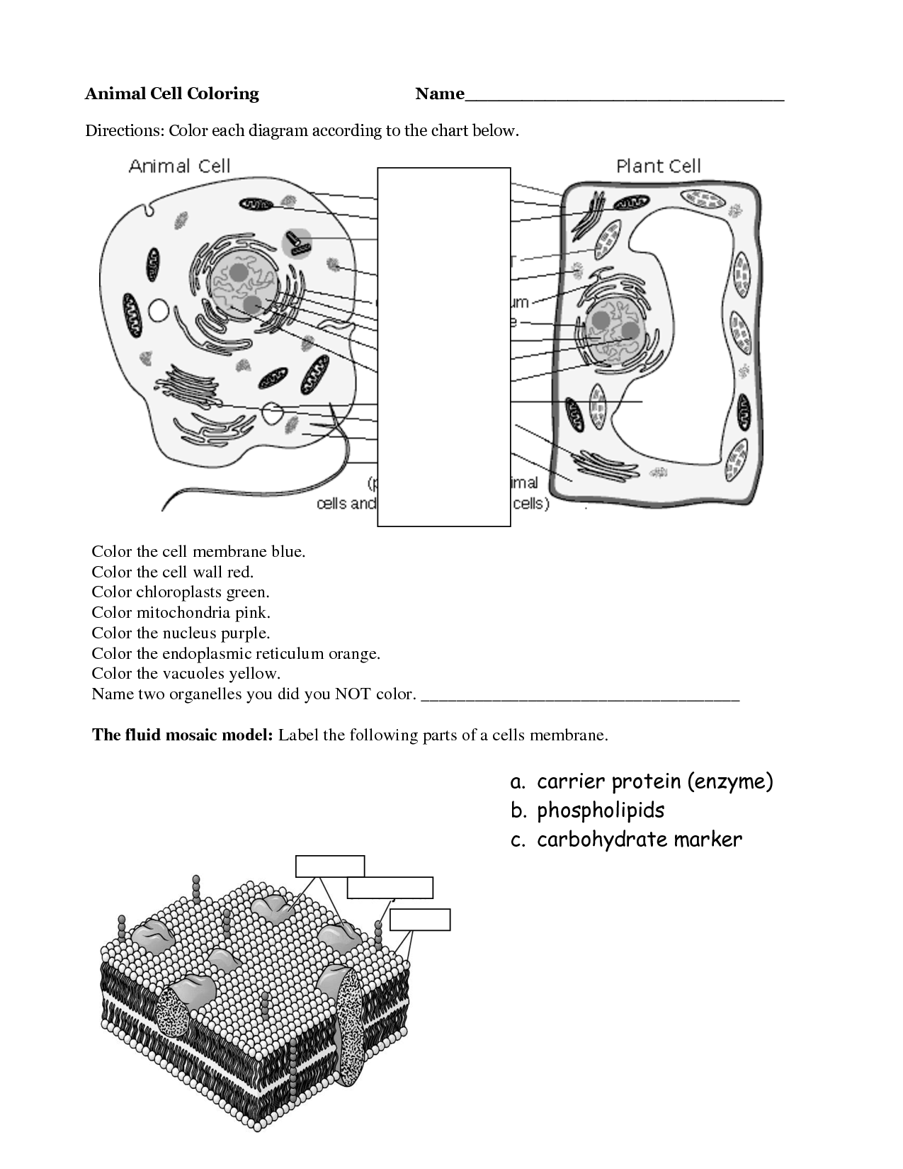 cell coloring worksheet cell membrane coloring worksheet key nidecmege cell worksheet coloring