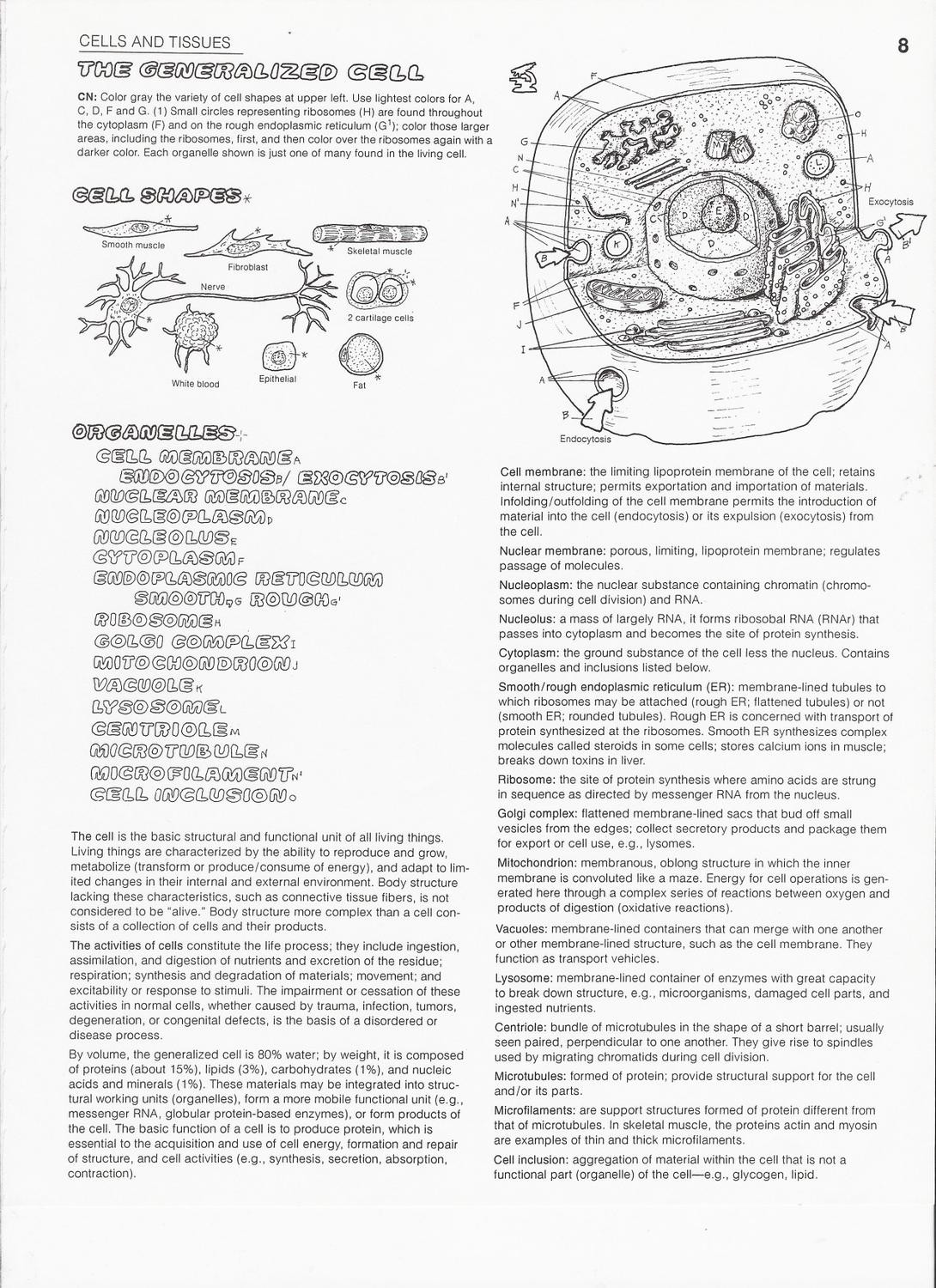 cell coloring worksheet cell organelles coloring worksheet cell coloring worksheet