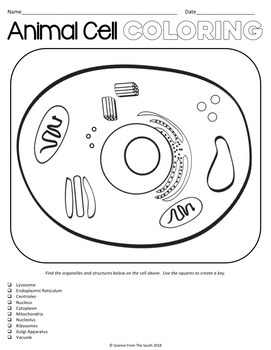 cell coloring worksheet pdf plant cell anatomy printables worksheets for cell coloring worksheet