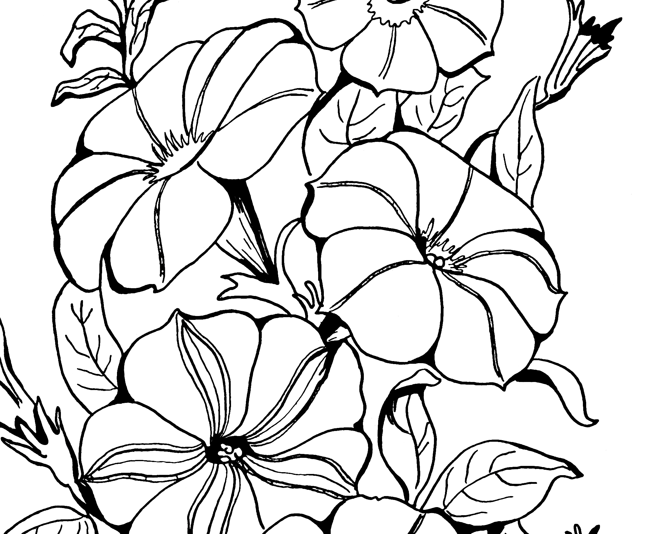 clipart for coloring adult coloring page petunias the graphics fairy coloring for clipart