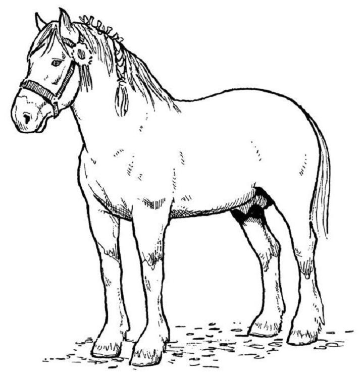 coloring horse clipart horse coloring png free horse coloringpng transparent coloring clipart horse