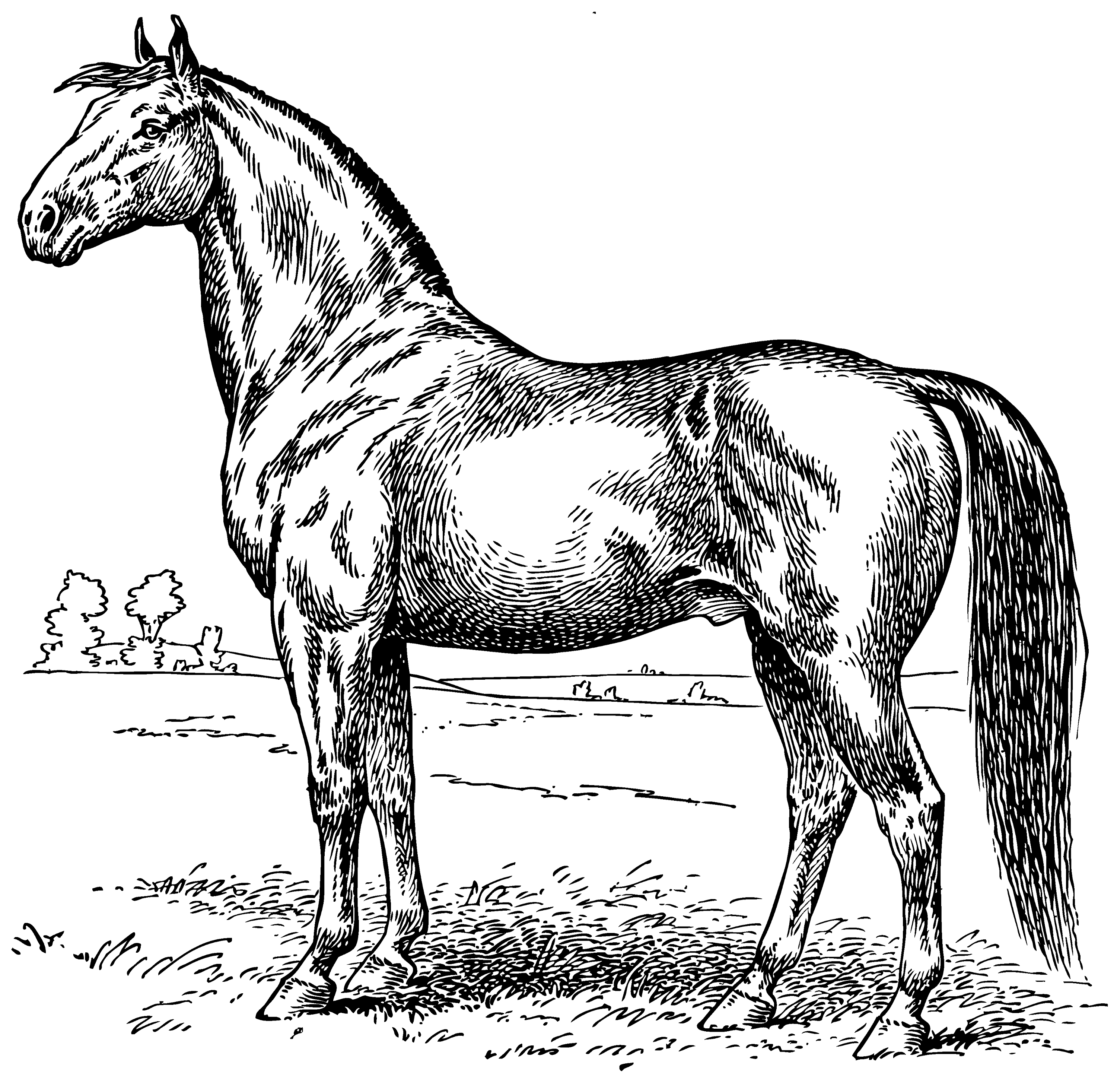 coloring horse clipart vintage horse coloring page free clip art clipart coloring horse