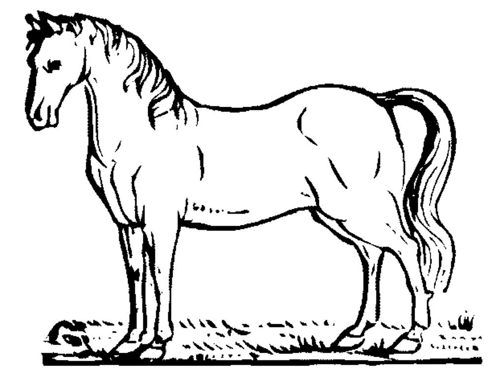 coloring horses printable free animals horse printable coloring pages for horses coloring printable