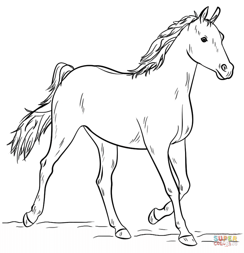 coloring horses printable free horse coloring pages for adults kids cowgirl magazine printable horses coloring