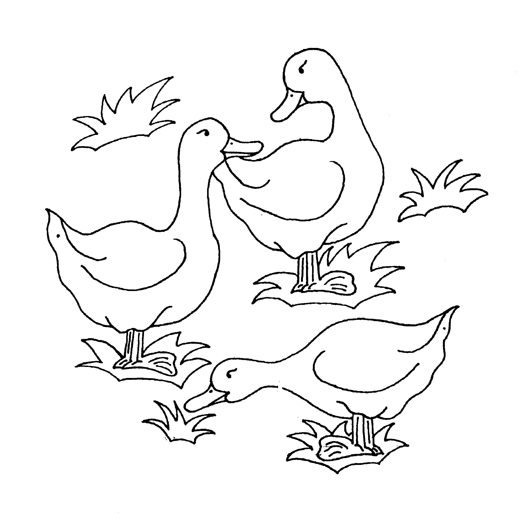 coloring image of duck free printable duck coloring pages for kids animal place coloring image duck of