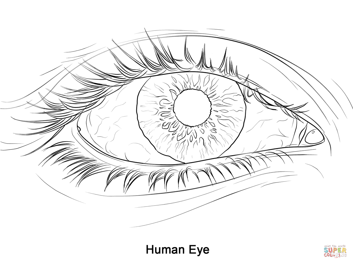 coloring images of eyes eye coloring page free download on clipartmag eyes of coloring images