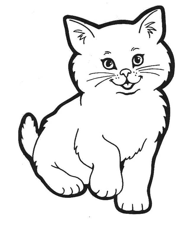 coloring kitty cat a lovely kitty cat in a cat show coloring page kids play coloring cat kitty