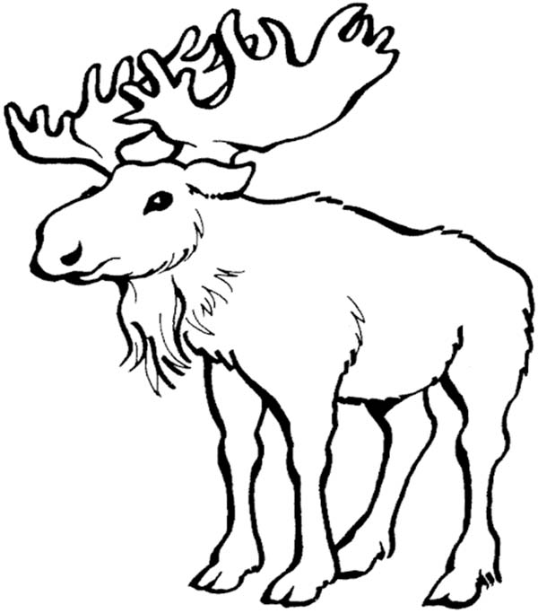 coloring moose 16 moose coloring pages print color craft coloring moose