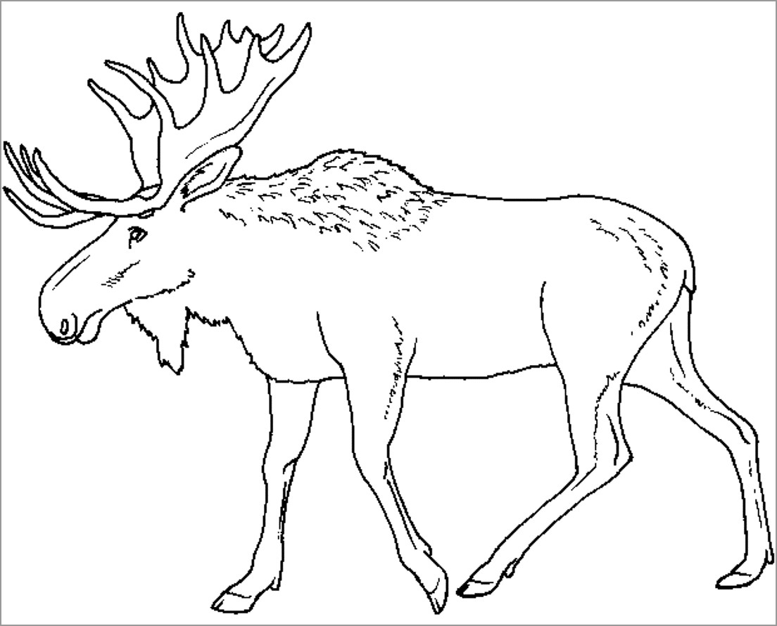 coloring moose caribou coloring pages coloringbay moose coloring