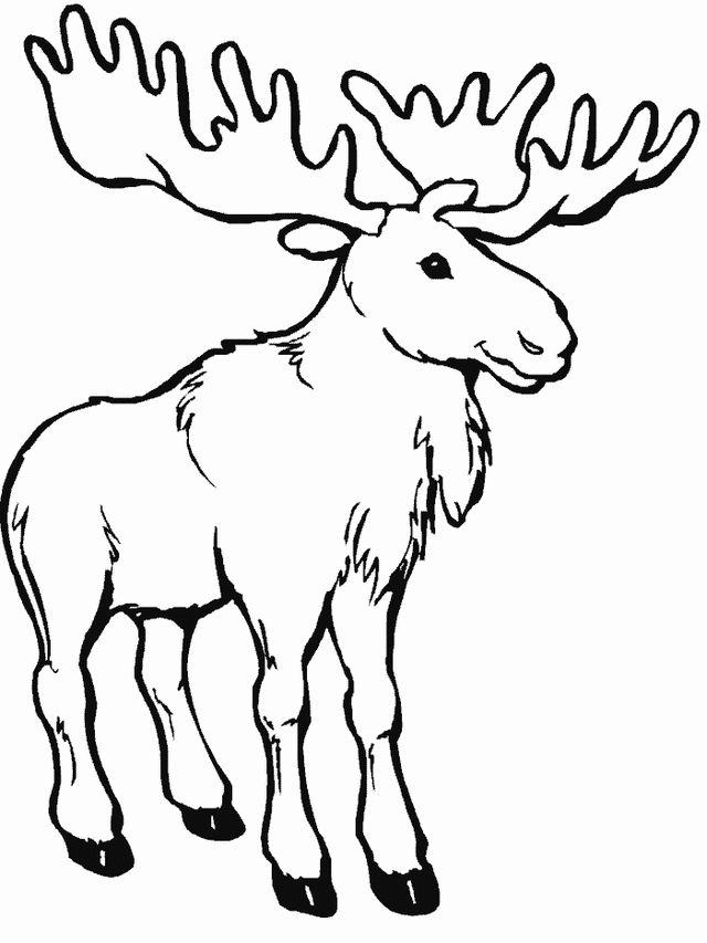 coloring moose funny moose coloring page download print online moose coloring