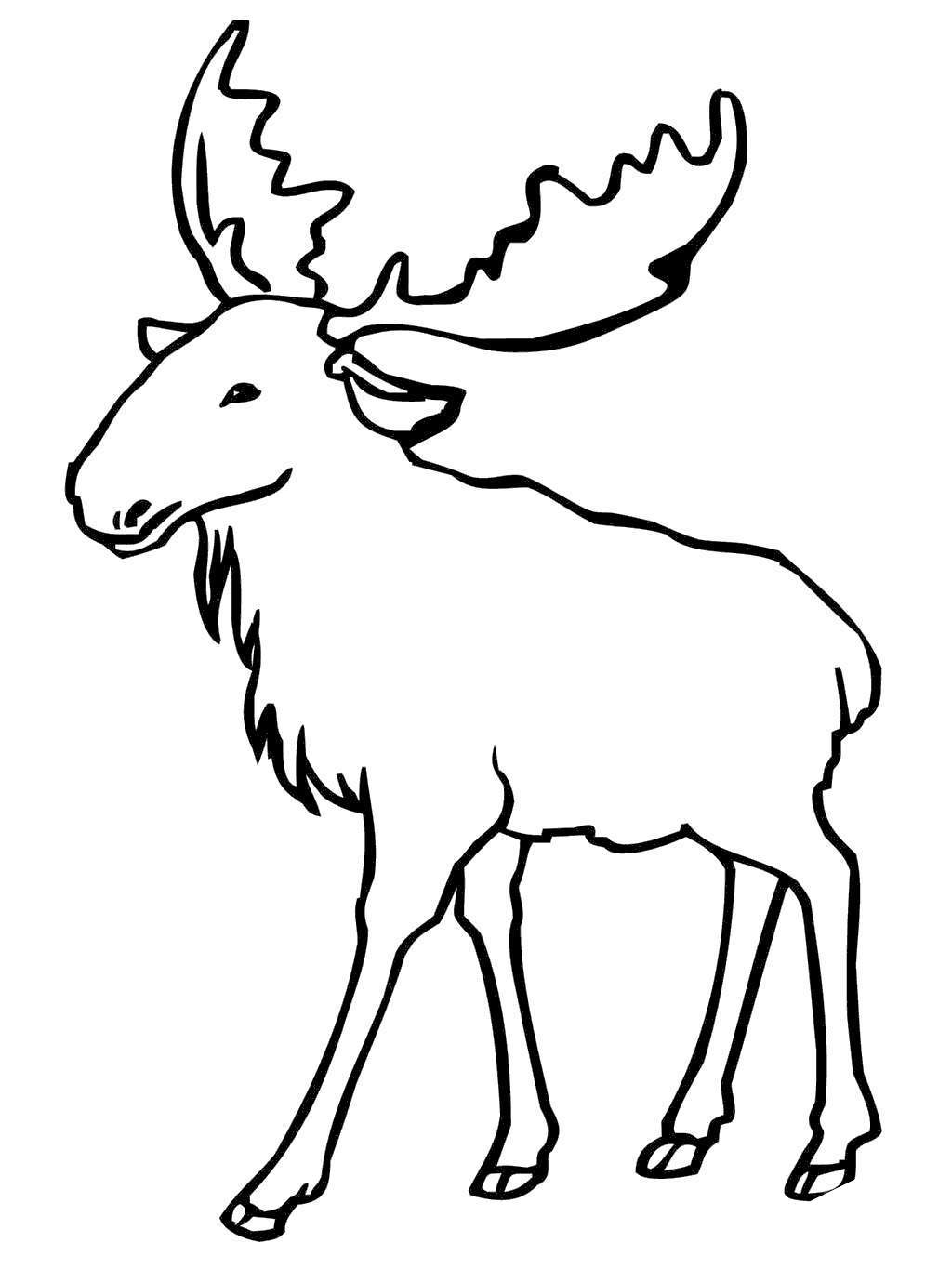 coloring moose moose coloring pages clipart free printable coloring pages moose coloring
