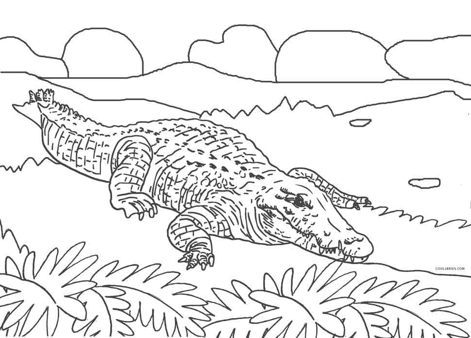 coloring page alligator alligator coloring pages cool2bkids coloring alligator page