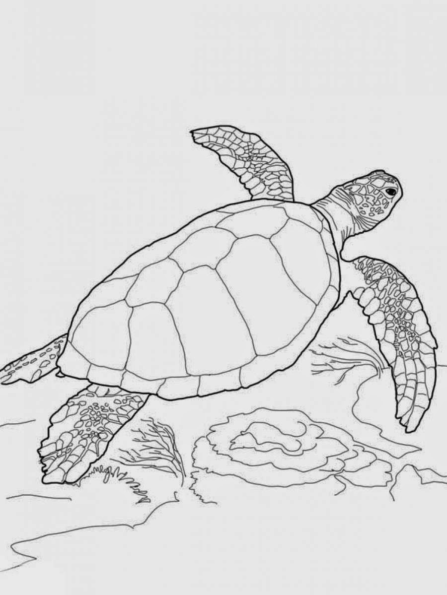 coloring page of sea turtle coloring pages turtles free printable coloring pages page of sea coloring turtle