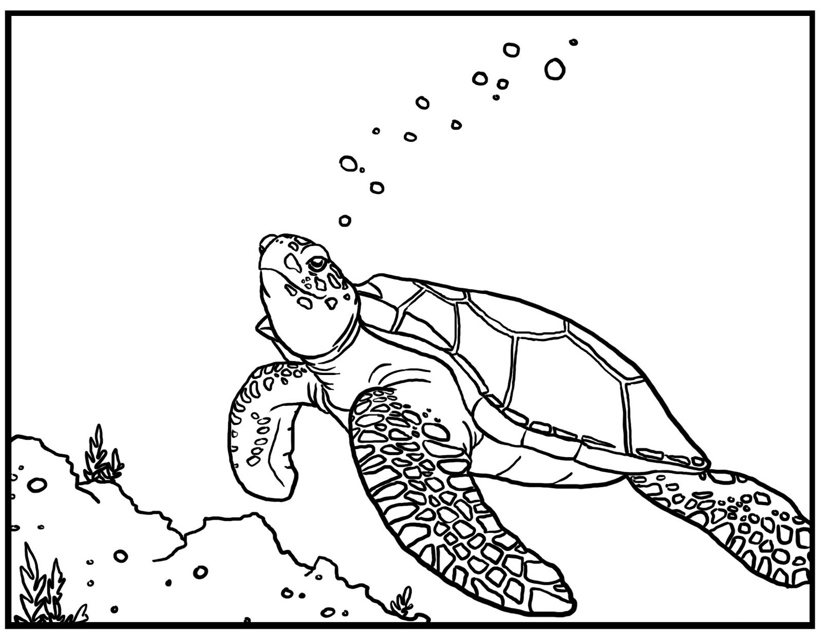 coloring page of sea turtle free printable turtle coloring pages for kids coloring sea turtle page of