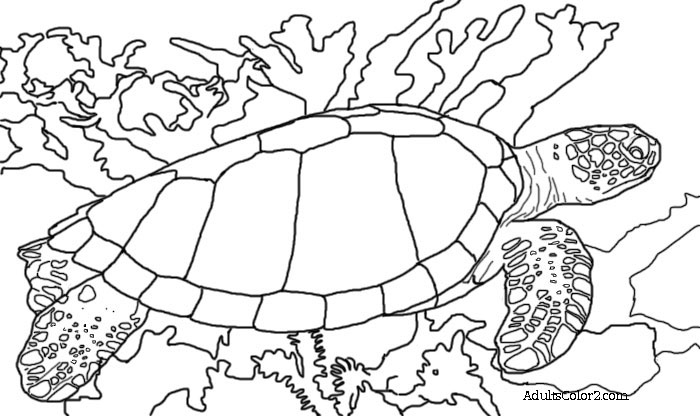 coloring page of sea turtle green sea turtle coloring page by mama draw it tpt sea of coloring page turtle
