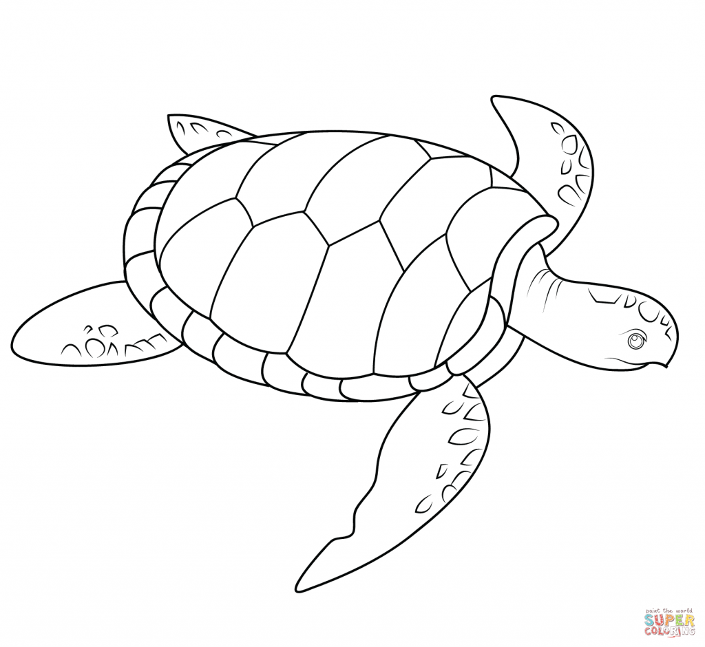 coloring page of sea turtle hawaiian turtle coloring pages at getcoloringscom free turtle page sea of coloring