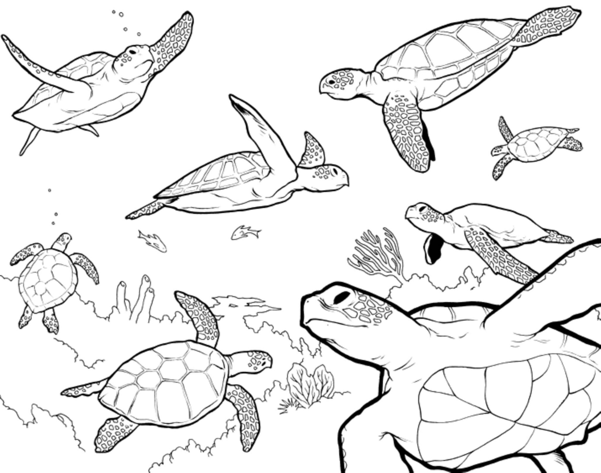 coloring page of sea turtle sea turtle coloring pages bestappsforkidscom sea of turtle page coloring