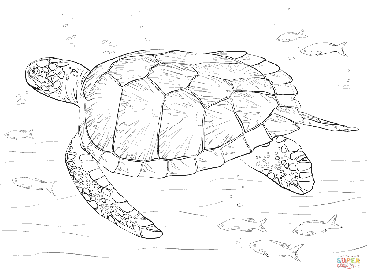 coloring page of sea turtle sea turtle coloring pages kidsuki coloring of sea turtle page