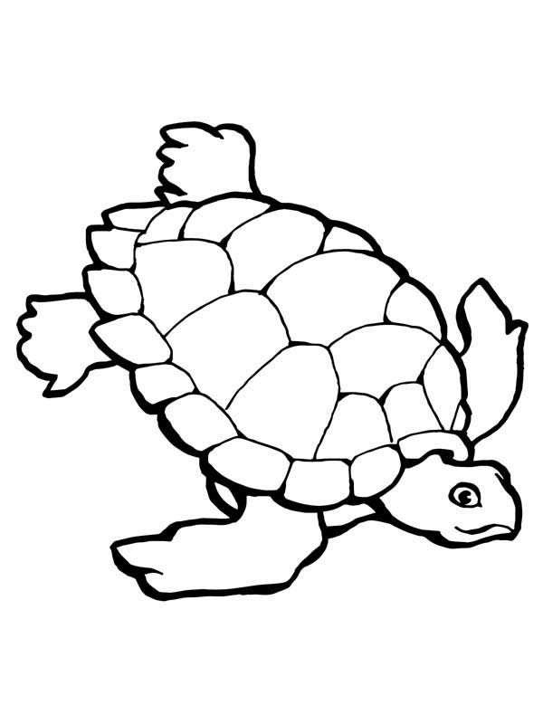 coloring page of sea turtle sea turtle endangered animal coloring page woo jr kids sea coloring of turtle page