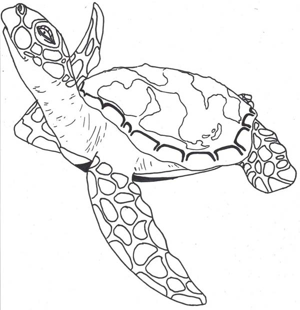 coloring page of sea turtle sea turtle facts free coloring page download print of sea coloring page turtle