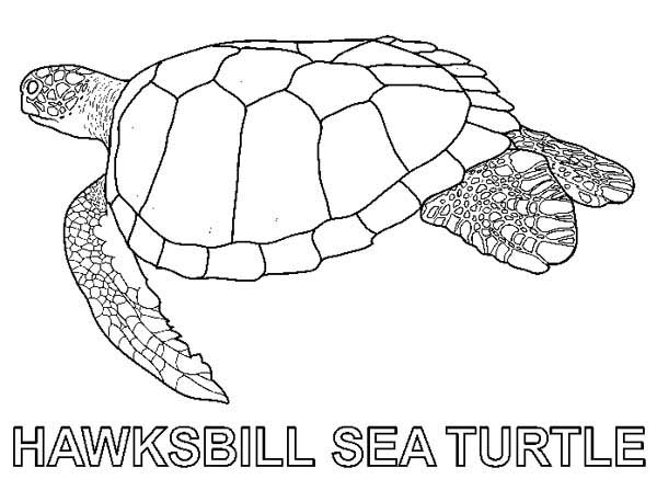 coloring page of sea turtle sea turtle research free coloring page download print of turtle sea page coloring