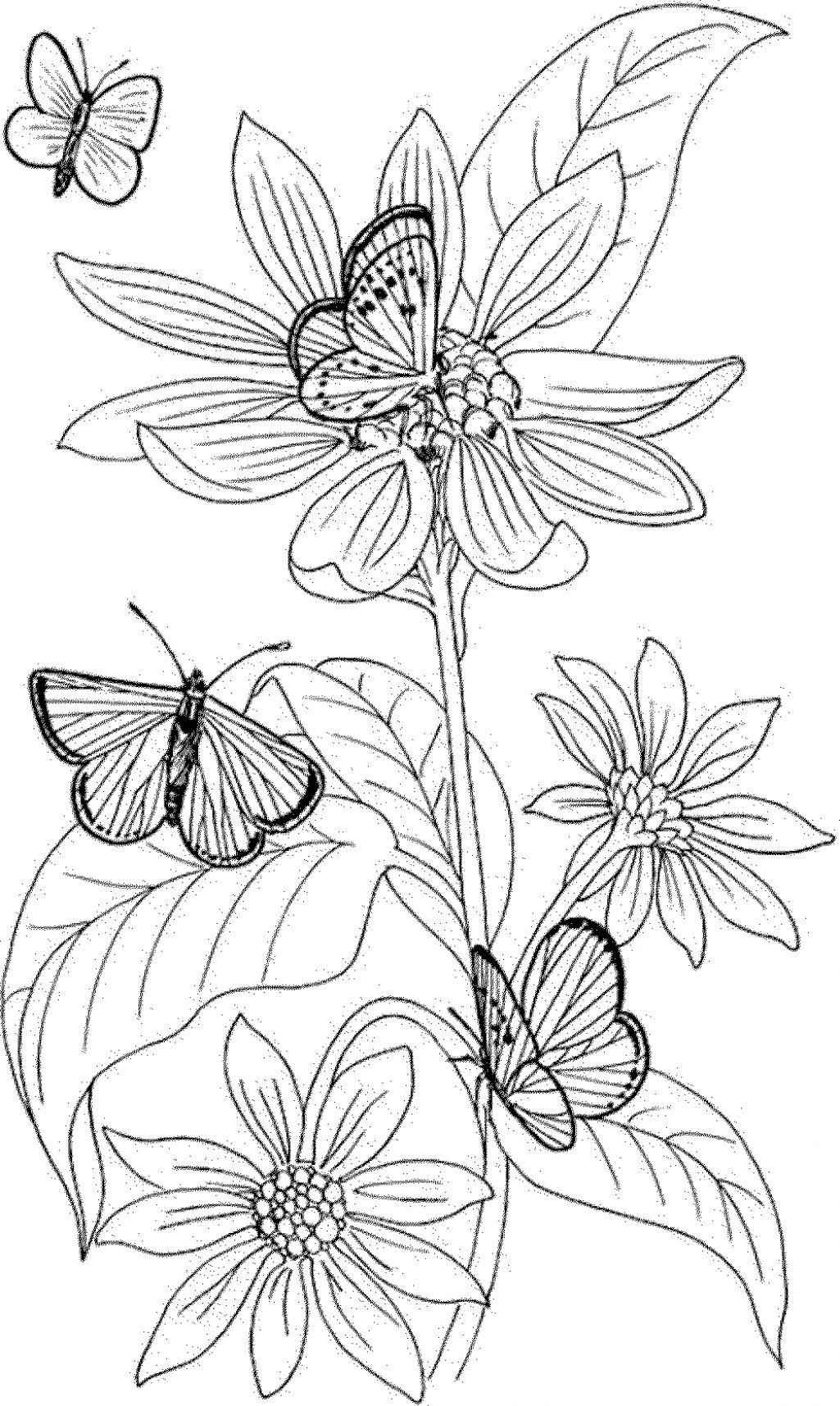 coloring pages for adults to print flowers flower coloring pages for adults print coloring pages adults flowers for to