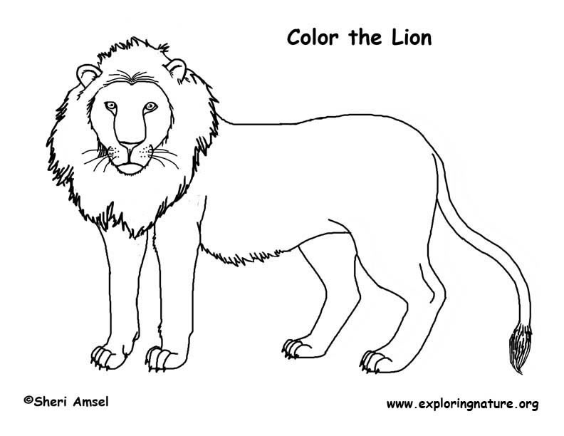 coloring pages lions the mighty lion coloring pages printable stpetefestorg lions pages coloring