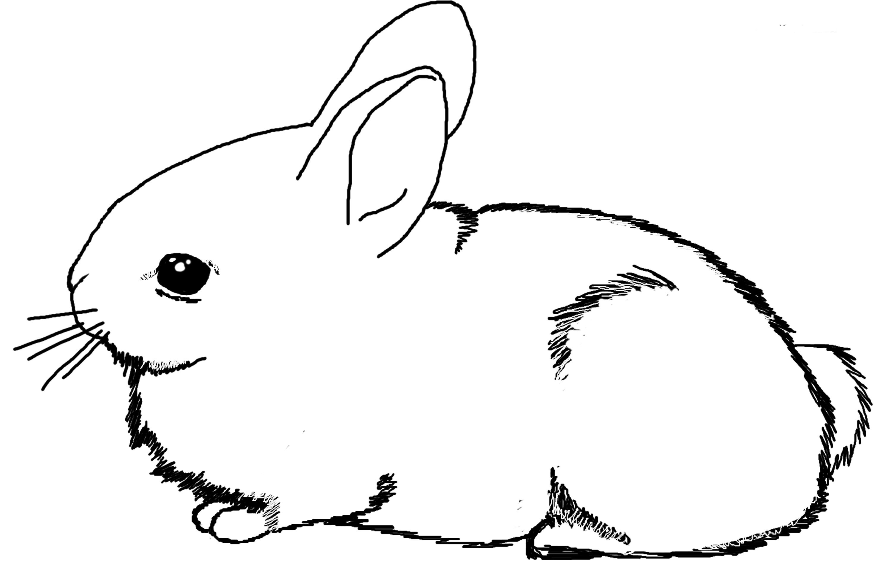coloring pages of a bunny bunny coloring pages best coloring pages for kids of bunny pages coloring a
