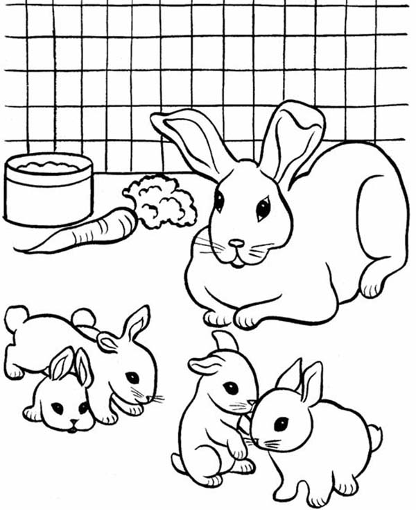 coloring pages of a bunny bunny coloring pages free download on clipartmag of coloring a bunny pages