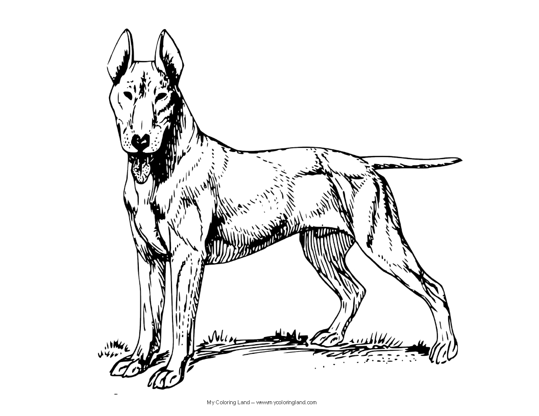 coloring pages of a dog dog breed coloring pages dog pages a coloring of