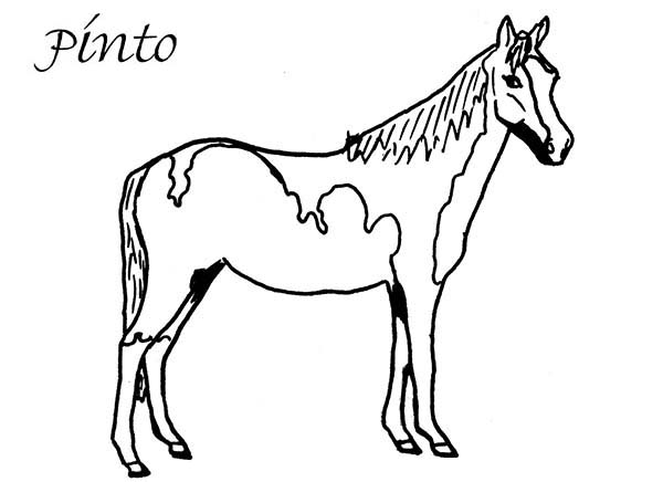 coloring pages of horse horse coloring pages coloringrocks of horse pages coloring