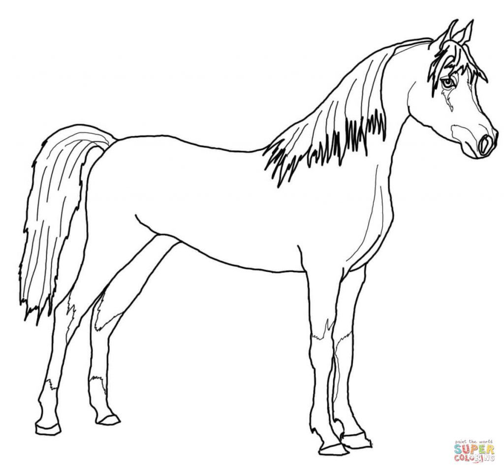 coloring pages of horse horse coloring pages for girls at getcoloringscom free pages of coloring horse