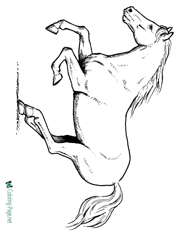 coloring pages of horse pretty horse coloring pages at getcoloringscom free pages of horse coloring