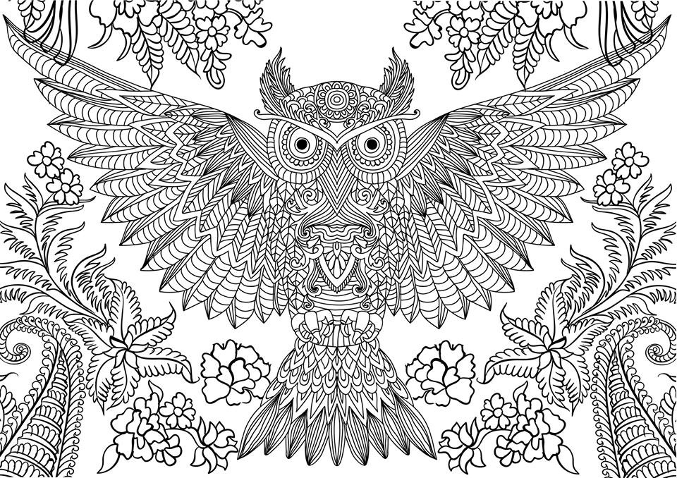 coloring pics owl coloring pages for adults free detailed owl coloring coloring pics