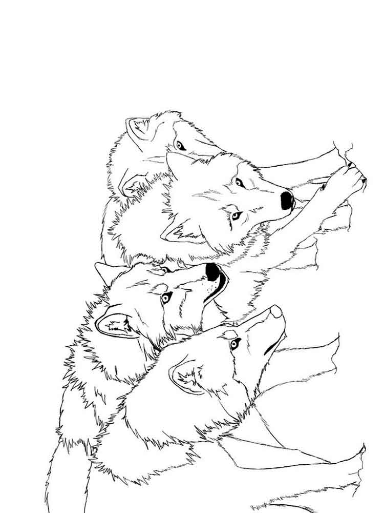 coloring picture of a wolf free wolf coloring pages of a picture coloring wolf