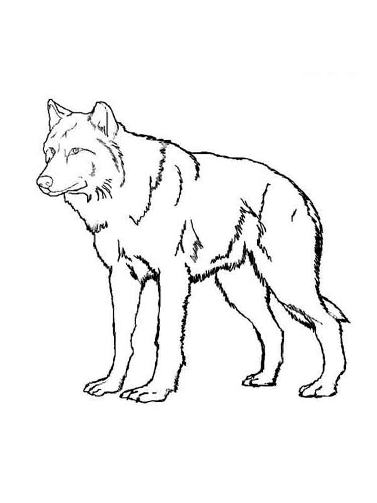 coloring picture of a wolf print download wolf coloring pages theme picture of a coloring wolf