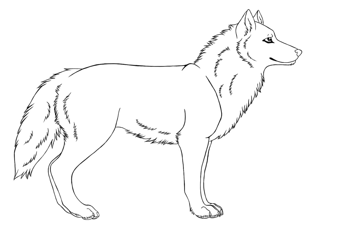 coloring picture of a wolf wolf head complex patterns wolves adult coloring pages a picture of coloring wolf