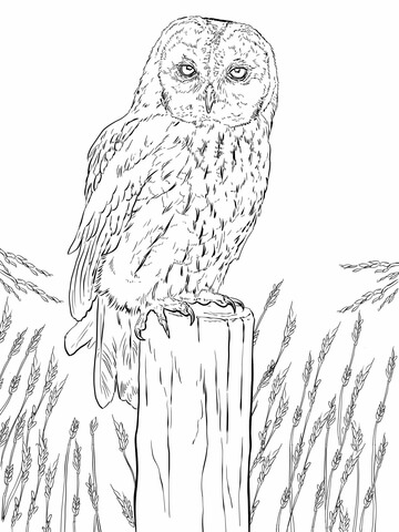 coloring picture of an owl coloring pages of owl babies bestappsforkidscom picture coloring owl of an