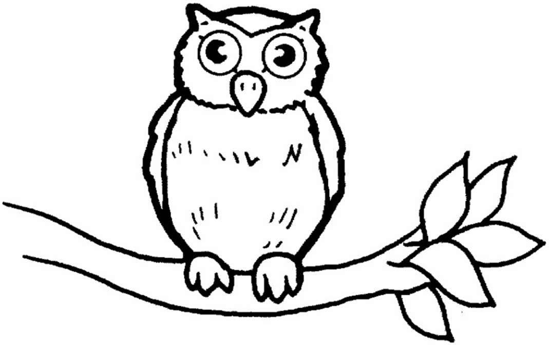 coloring picture of an owl coloring ville coloring owl of an picture