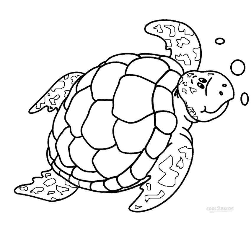 coloring picture turtle cute coloring pages for kids at getcoloringscom free turtle coloring picture