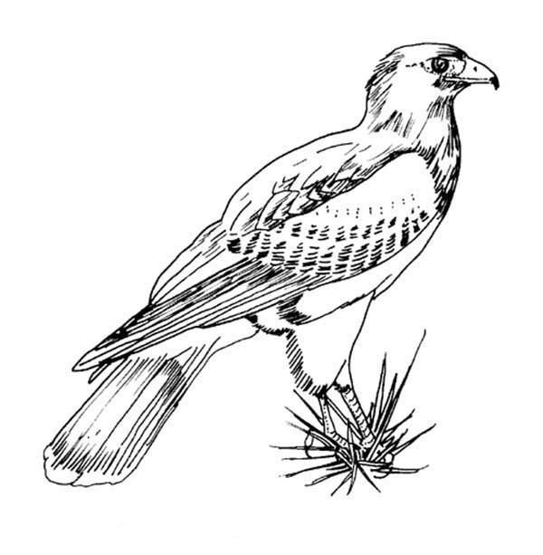 coloring pictures birds awesome picture of hawk bird coloring page color luna coloring pictures birds