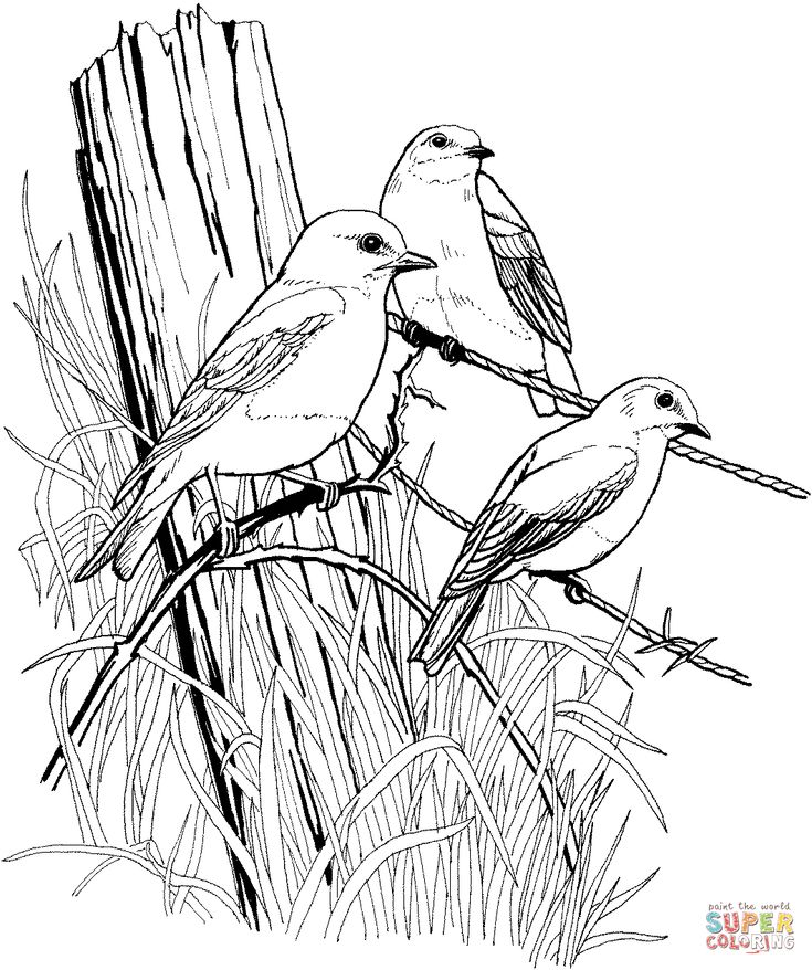 coloring pictures birds colouring page birds google search bird drawings bird birds pictures coloring