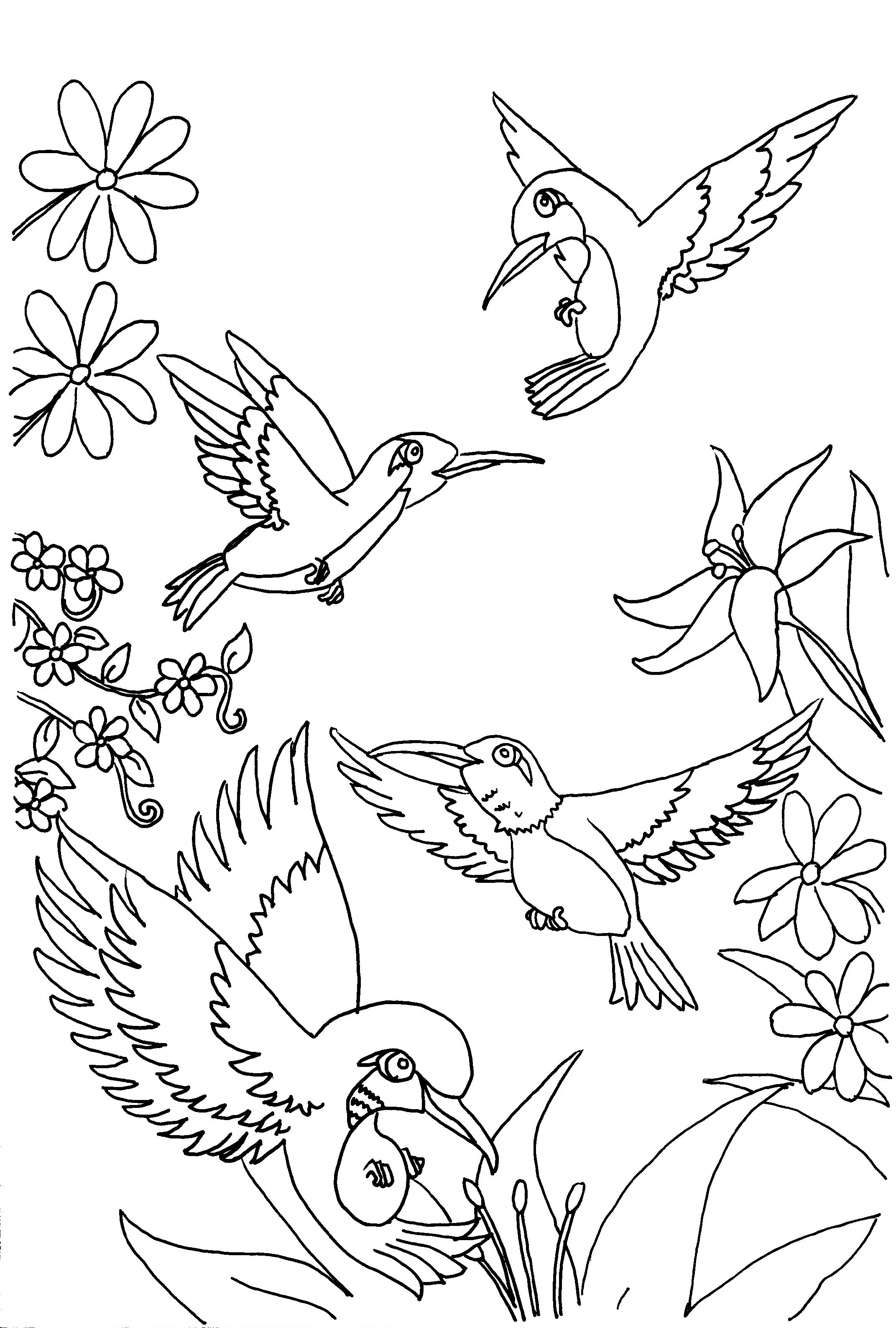 coloring pictures birds free printable hummingbird coloring pages for kids pictures coloring birds