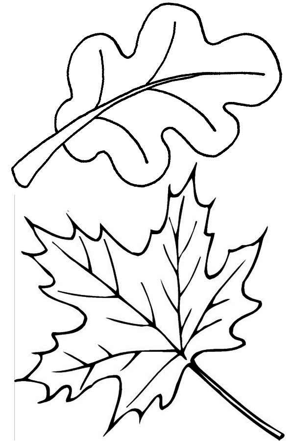 coloring pictures leaves autumn leaves kiddicolour pictures coloring leaves