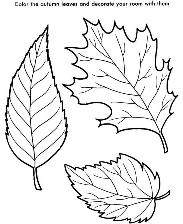 coloring pictures leaves fall coloring pages getcoloringpagescom pictures leaves coloring